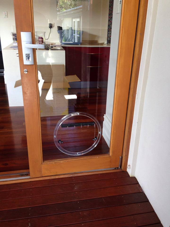 Glass Dog Doors Perth Wa Glass Pet Doors